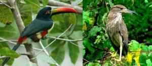 bird-watching-in-nepal10