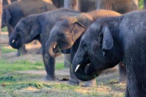 elephand-brdng