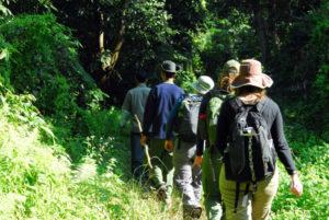 jungle-walks